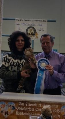 TD' Everlasting Love of Arcobaleno  5th best all breed kitten in Niedernhausen CFA show 23-24/10/2015